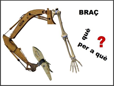 Braç01